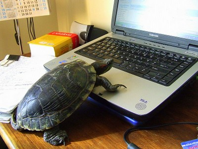 Turtle-Computer-CUNY